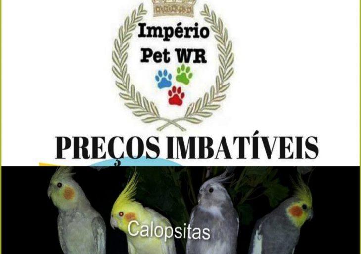 PROMOÇÃO DE CALOPSITAS E GAIOLAS SÓ NO IMPERIO PET WR – VENHA CONFERIR!!!