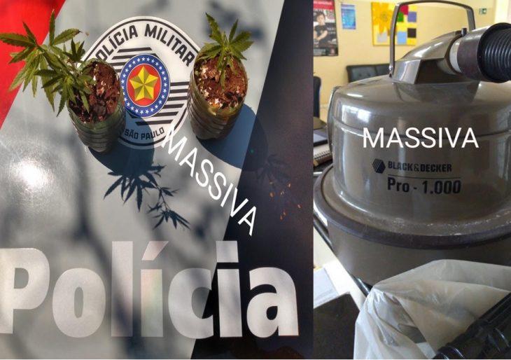 POLÍCIA MILITAR DE IPAUSSU APREENDE INDIVÍDUO COM 03 PÉS DE MACONHA NO COCAJÁ II