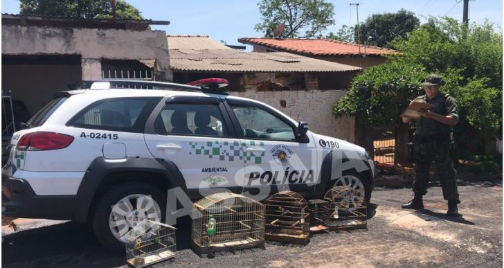 POLÍCIA AMBIENTAL APREENDE 4 AVES SILVESTRES NO DISTRITO DE IRAPÉ/ CHAVANTES